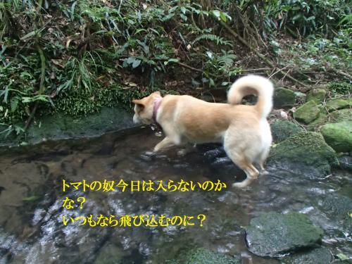 P7110893_convert_20160712092918.jpg