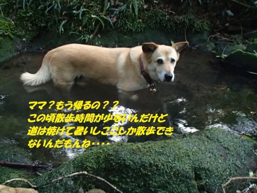 P7211040_convert_20160723085542.jpg