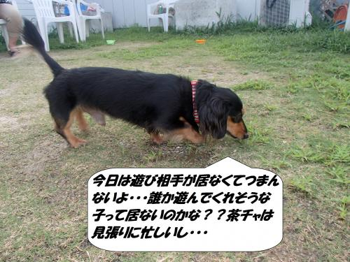 P7231074_convert_20160724095723.jpg