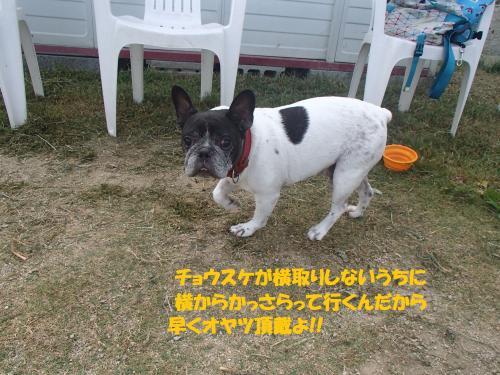 P7300031_convert_20160731092746.jpg