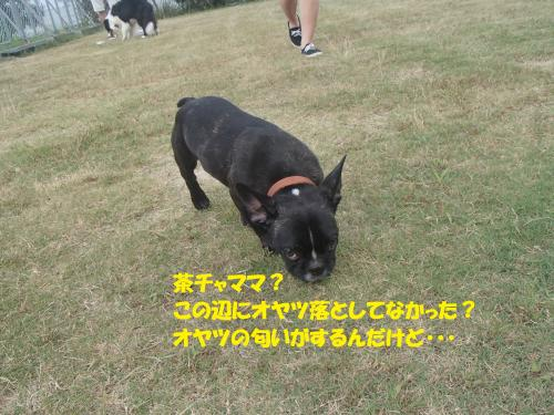 P7310056_convert_20160802084531.jpg