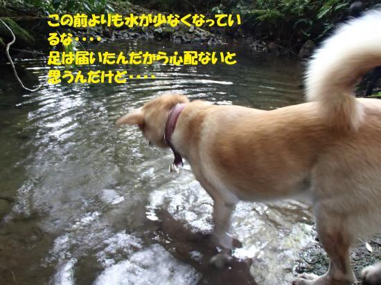 P8090190_convert_20160811084627.jpg