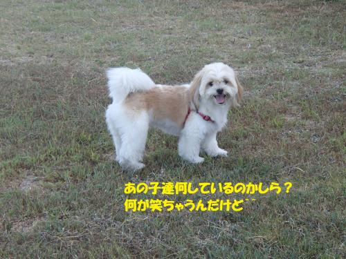 P8110214_convert_20160812090619.jpg