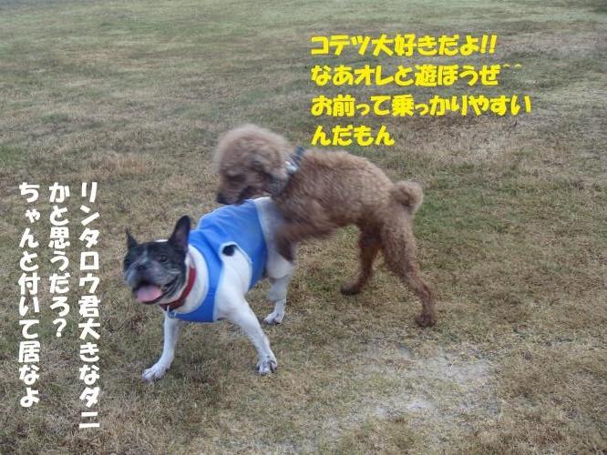 P8130252_convert_20160814085639.jpg