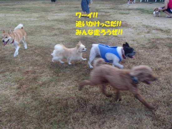 P8130253_convert_20160814085727.jpg