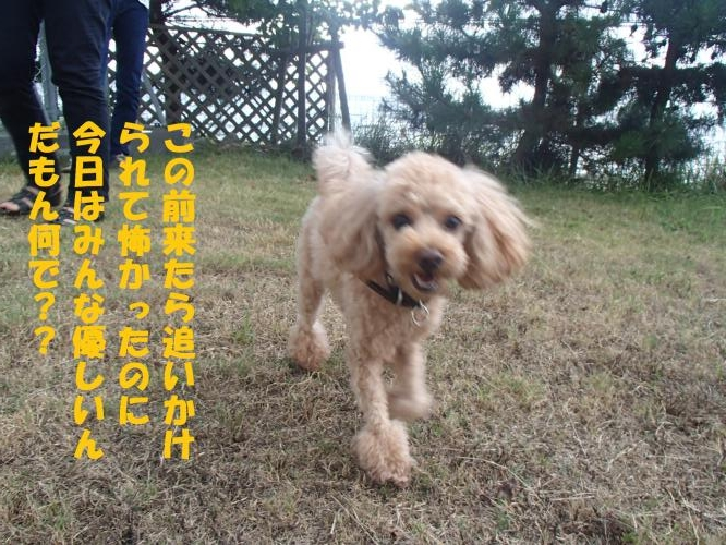 P8200349_convert_20160821094148.jpg
