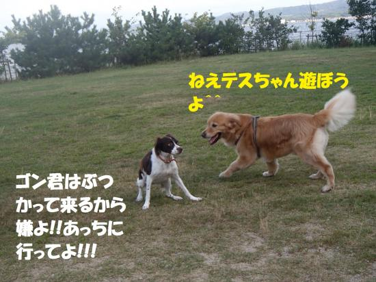 P8210372_convert_20160822092849.jpg
