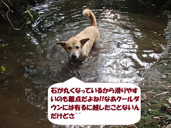 P8240449_convert_20160825092019.jpg