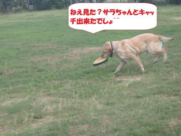 P8270461_convert_20160828093131.jpg