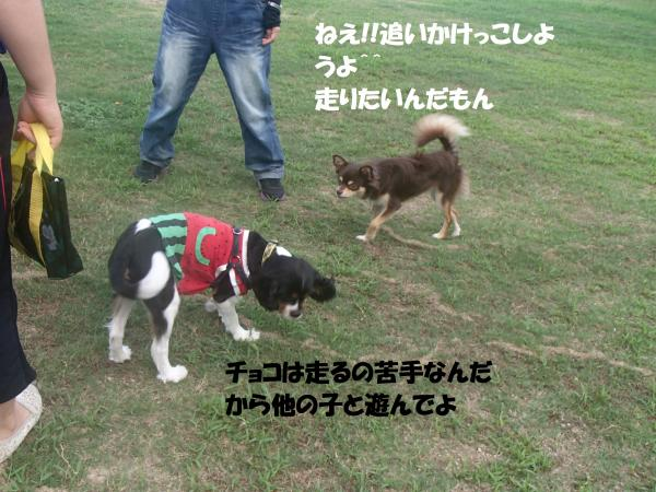 P8270468_convert_20160828093203.jpg
