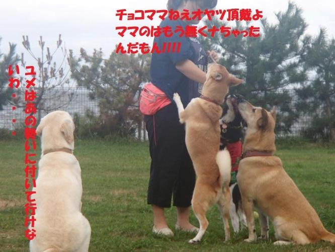 P8270473_convert_20160828093442.jpg