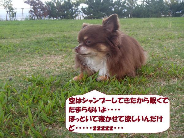 P9030599_convert_20160904111951.jpg