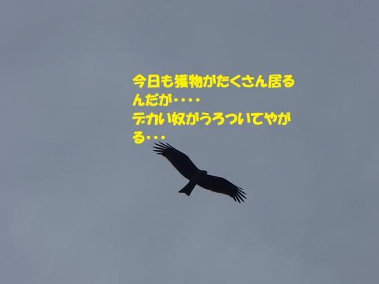 P9170807_convert_20160918124100.jpg
