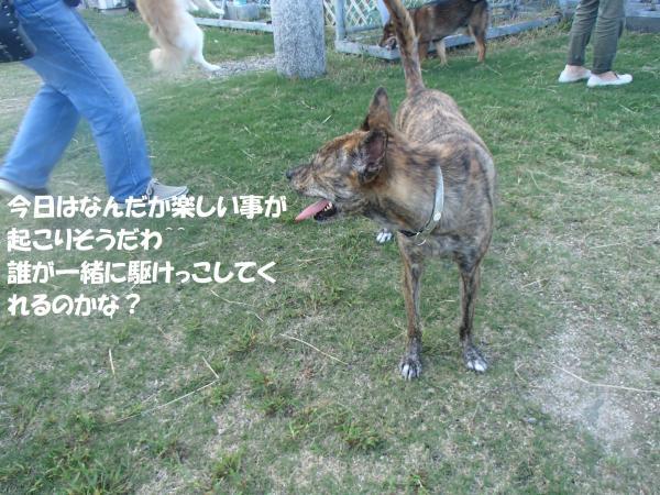 P9240951_convert_20160927094826.jpg