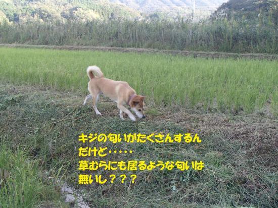 PA071079_convert_20161008072320.jpg