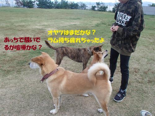 PA101119_convert_20161011140542.jpg