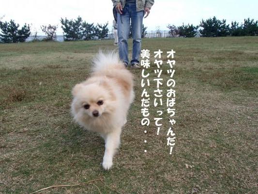 PA101120_convert_20161011140933.jpg