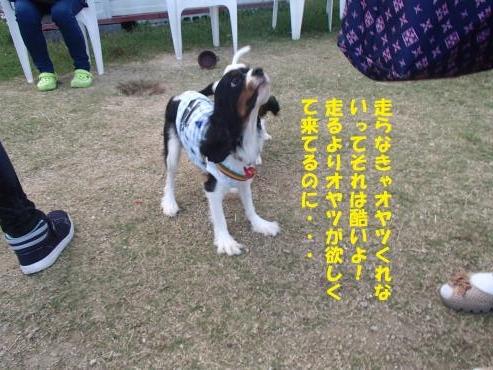 PA101130_convert_20161011141215.jpg