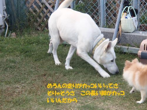 PA101133_convert_20161011141344.jpg