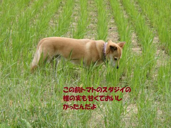 PA111136_convert_20161014080434.jpg
