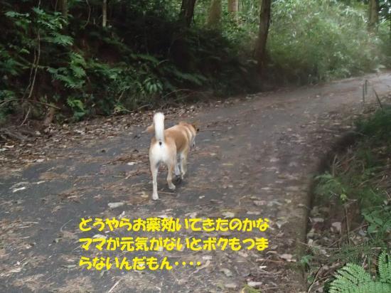PA131146_convert_20161014080713.jpg