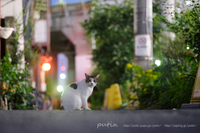 putin_owner_nekoyuhi1692754115748.jpg