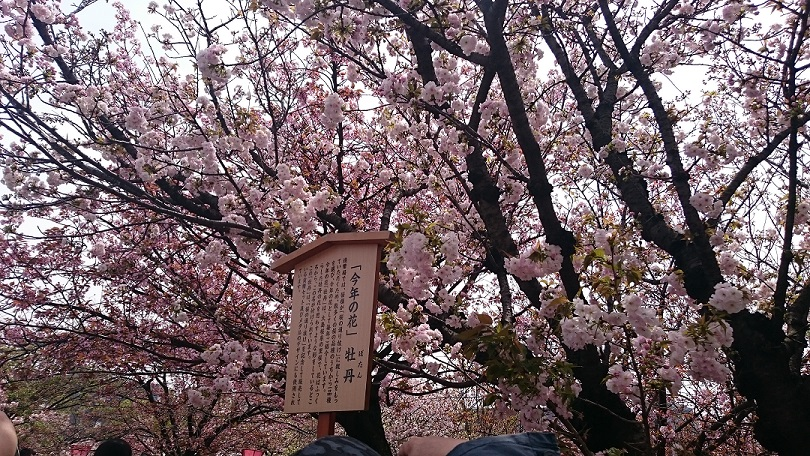 今年の桜の名前