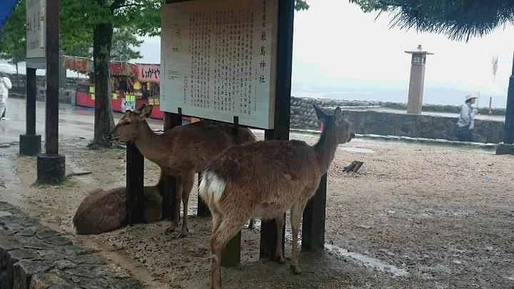 DSC_0472鹿
