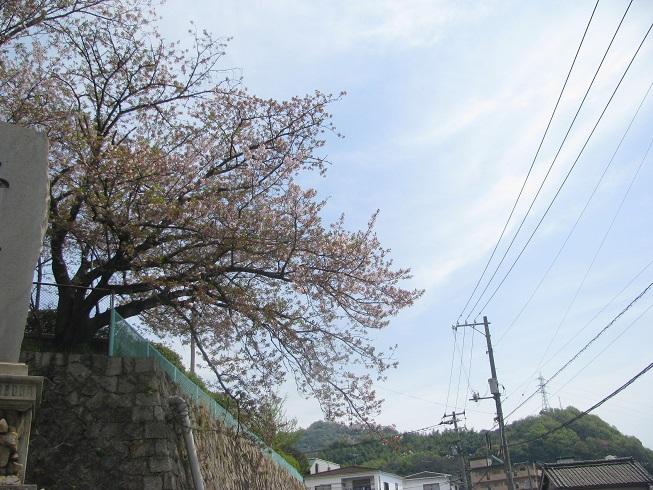 IMG_1583行く春