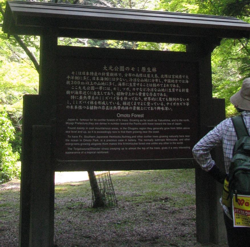 IMG_1914モミ原生林