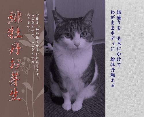 芽生ポスター2