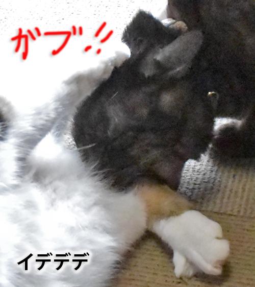 4_DSC_2661.jpg