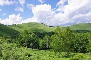 七飯の山林