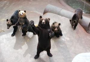 客にアピールする熊
