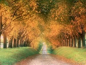 10月の道