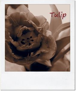 Tulip2016
