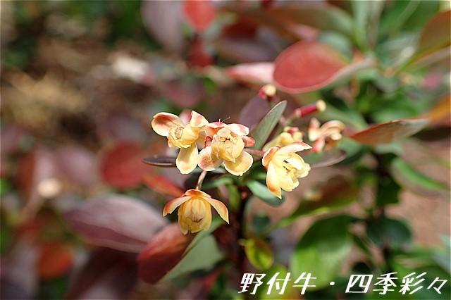 s-O20160608-ムラサキメギ-0