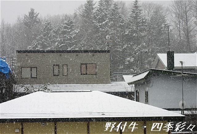s-IMG_4462.jpg