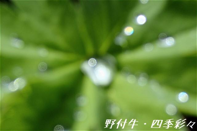 s-O20160507-135901-0.jpg