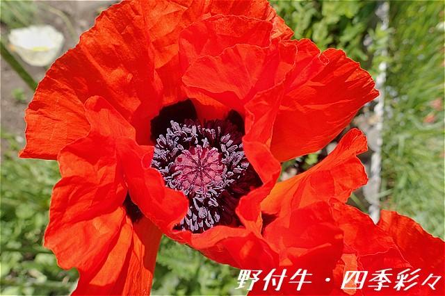 s-O20160612-103922-0.jpg