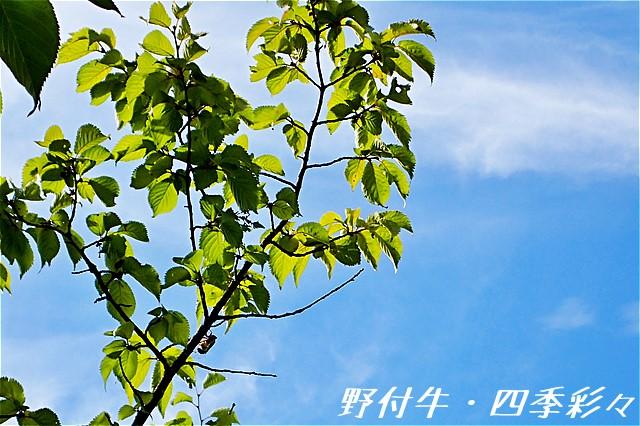 s-O20160810-135310-0.jpg