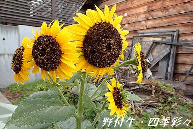 s-O20160922-151021-0.jpg