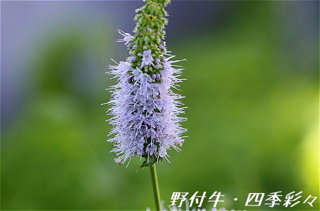 s-P20160811-151845-0.jpg