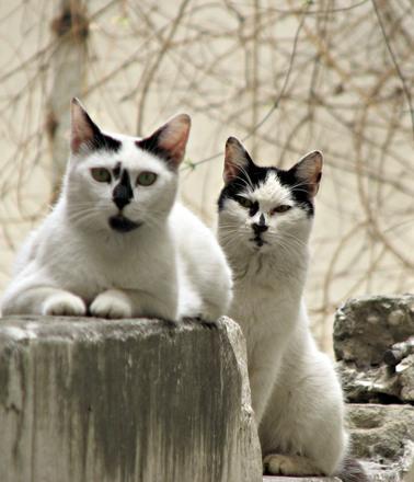 猫 ジェラシー カップル