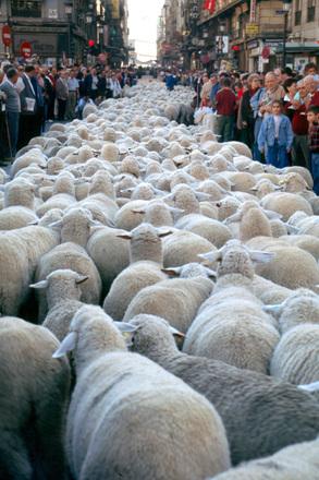 渋滞 羊 満員