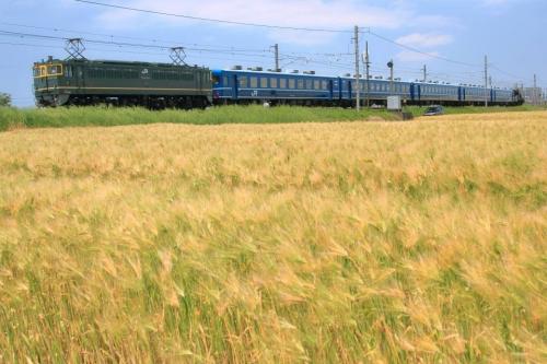 IMG_7098 麦畑