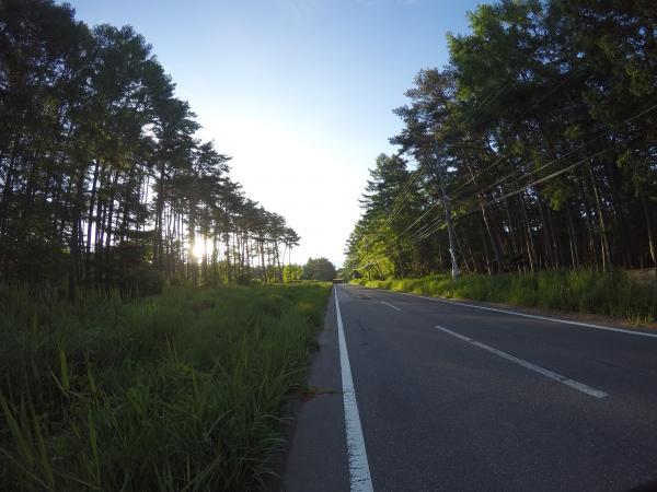 朝ラン0529_御柱街道の松林