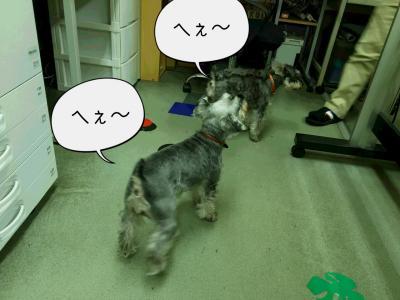 moblog_007d00c4.jpg