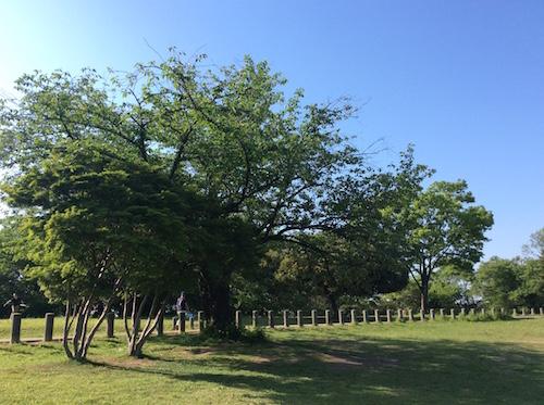 2015緑地公園小