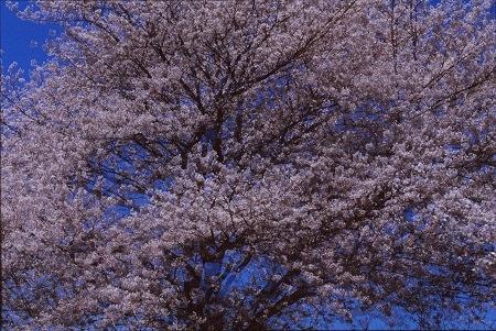 20160415_noririn.jpg